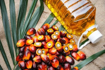 Current Price Of Palm Oil In Nigeria