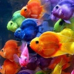 Fishful Thinking Aquarium   Aquarium Fishes